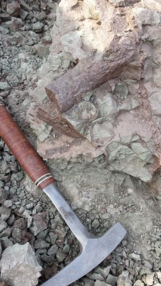 A Wits University team is busy digging up dinosaur bones in Dordrecht  Picture: BEN MACLENNAN